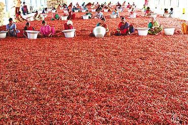 Saudi Customs bans Indian pepper