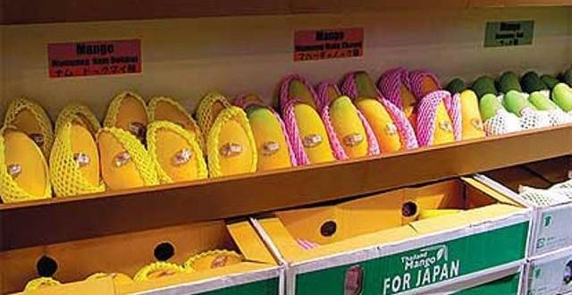Pakistani mangoes now in Japan