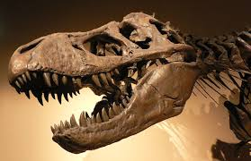 US Customs to return 'Tyrannosaurus Skull' to Mongolia