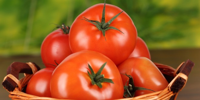 Jordan resumes tomato exports to Syria