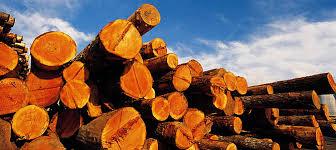 Smuggling of herbs, timbers rampant in Karnali