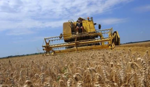 Case of exorbitant wheat price