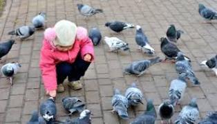 A quater bird species at risk in British