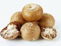 b_betel-nuts