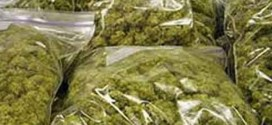 Jamica police seize 450 pounds of ganja worth J$ 2.3 million