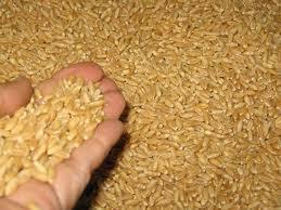 Jordan buys 100,000 tonnes of wheat in tender