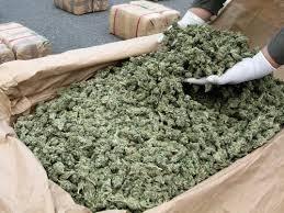 Curaçao Customs seizes 130kg marijuana