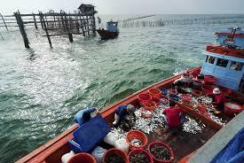 Pakistan seafood exports to China rise