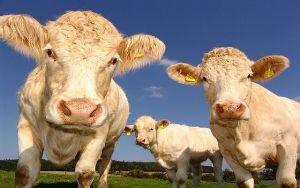 Irish food, drink exports surpass €10.8bn, Bord Bia says