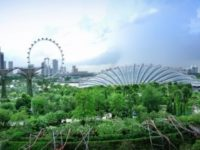 Singapore-trees